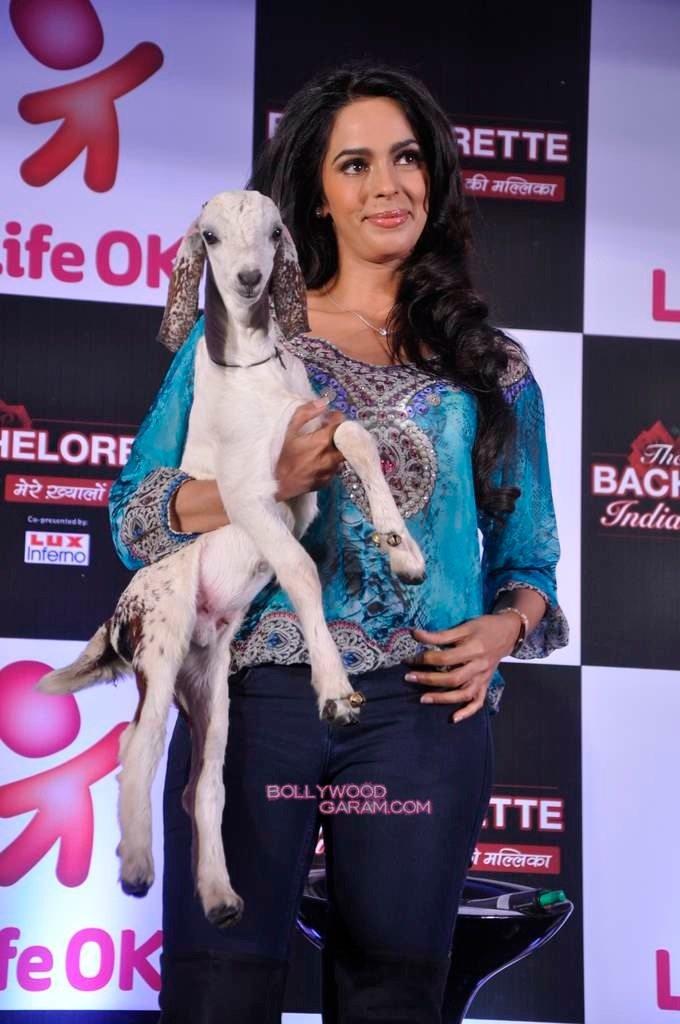 Mallika Sherawat Bachelorette India-4