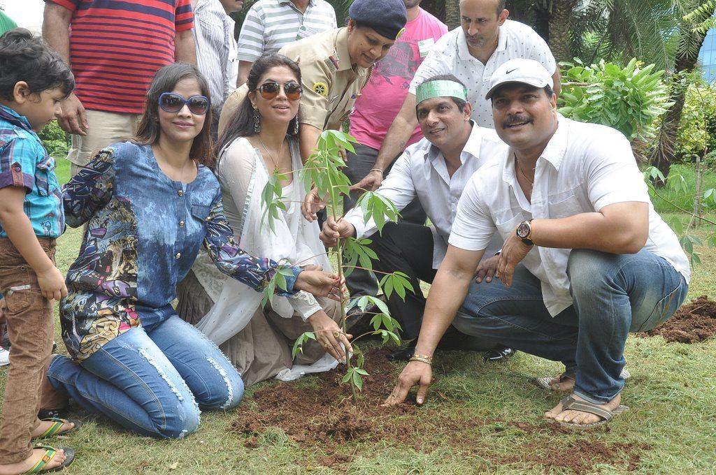 Kavita daya plantation (2)