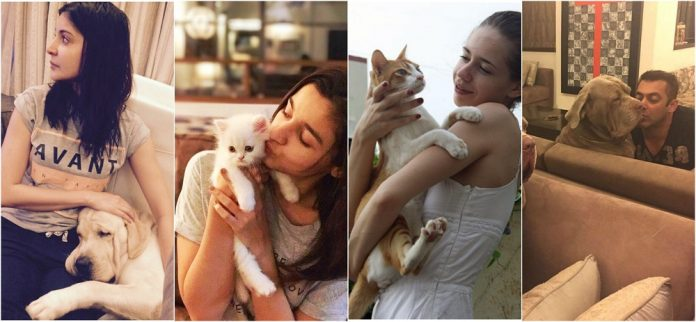Bollywood celebrities pets