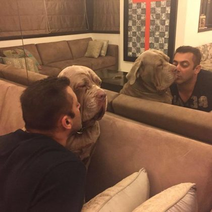 salman khan's dogs (1)